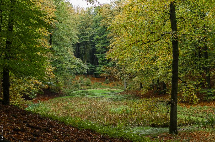 Natuurfotografie - Prachtige natuurfoto's - Speulderbos